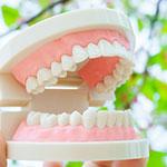 義歯と入れ歯